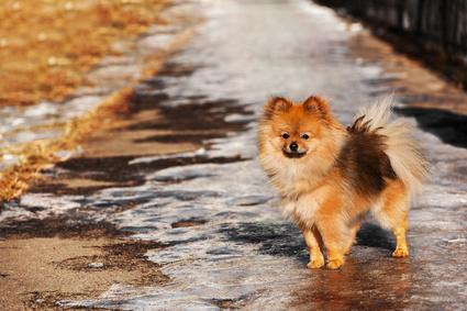 Das verbotene Streusalz auf den Gehwegen macht Hundepfoten zu schaffen.